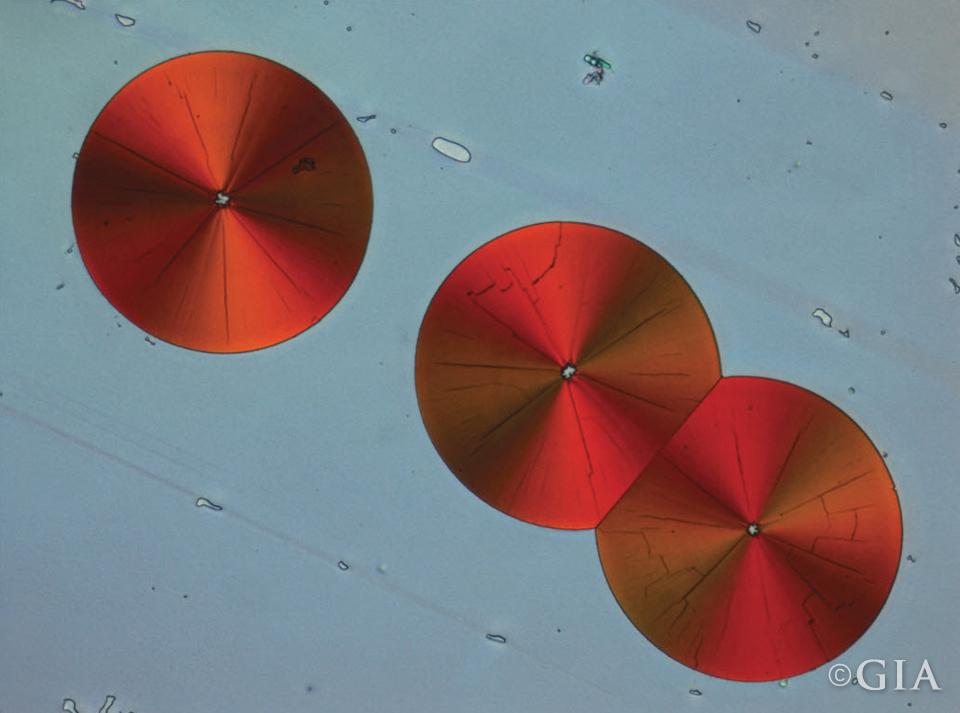 Apatite with Hematite Discs. Magnification 200x