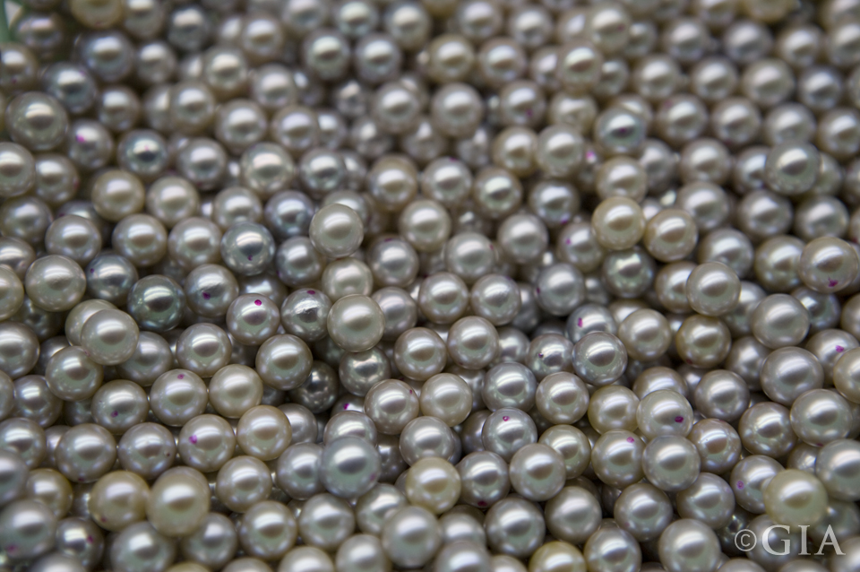 A collection of akoya cultured pearls. Courtesy of Xuwen Pearl Paradise Co., Ltd.