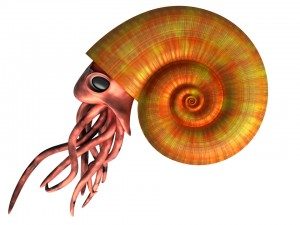 Illustration of an extinct ammonites