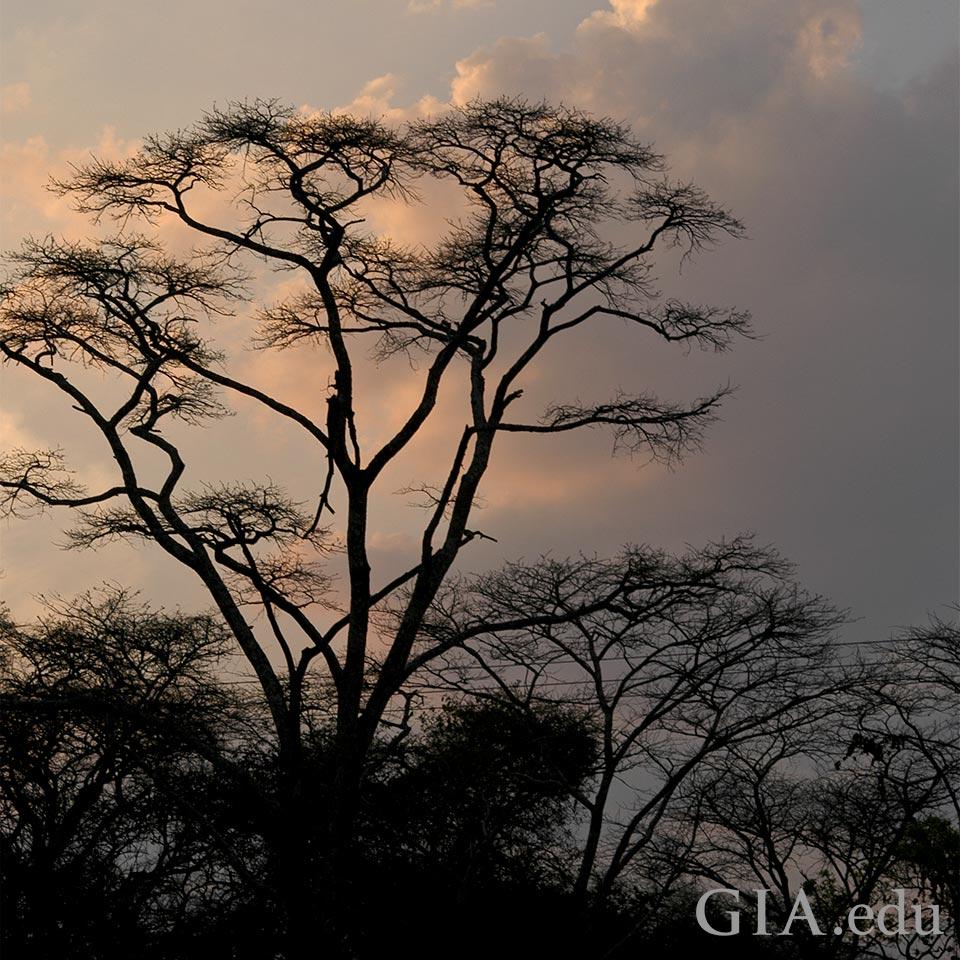 Woodland in Zambia