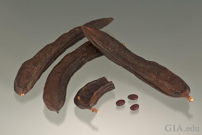 Carob seeds and carob pods