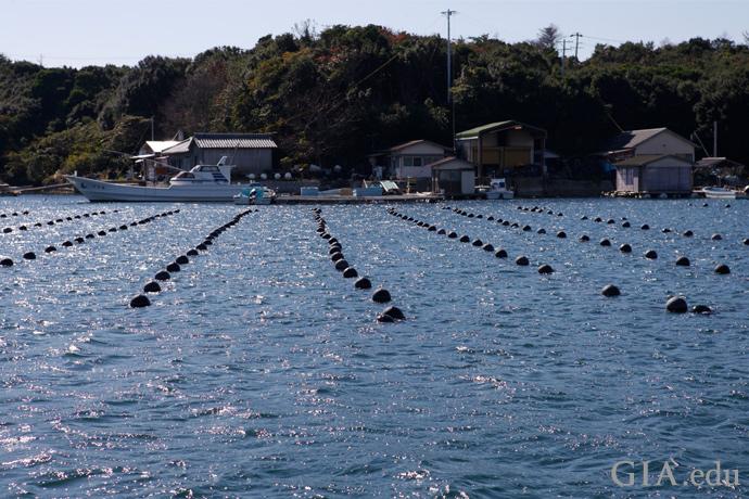 日本の英虞湾にあるアコヤ真珠養殖場